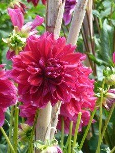Des fleurs partout dans Z Citations p1020772-225x300